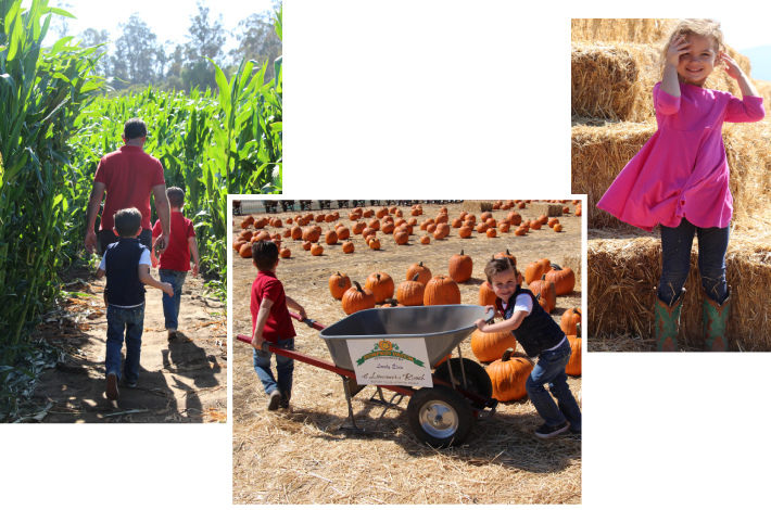 Pumpkin Patch at Limoniera Ranch